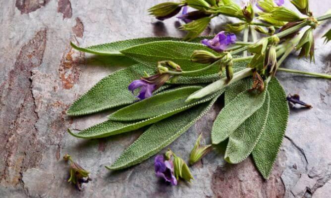 Ramo de una planta medicinal