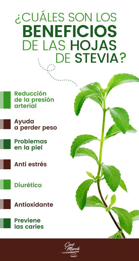 Más sobre la stevia