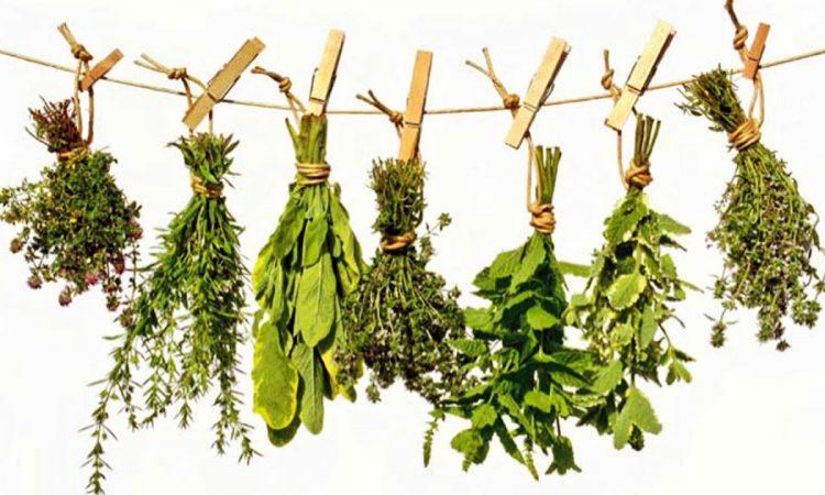 Ramos colgantes de hierbas medicinales