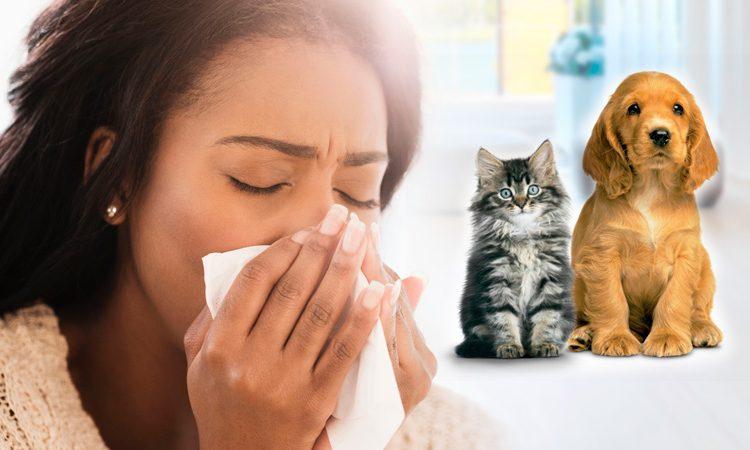 eres alérgico a los animales