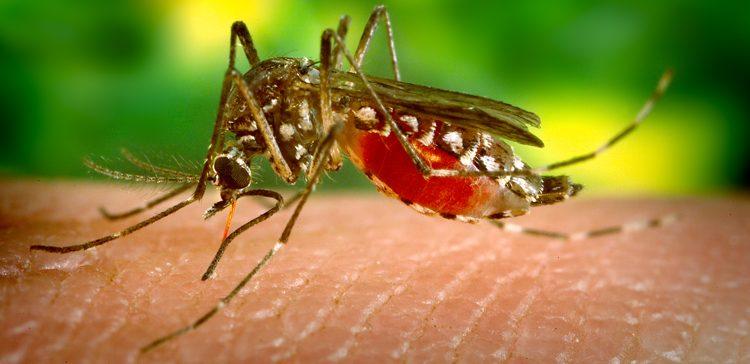 virus de la chikunguya