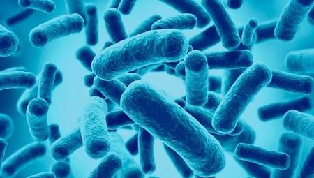 son buenos los probióticos